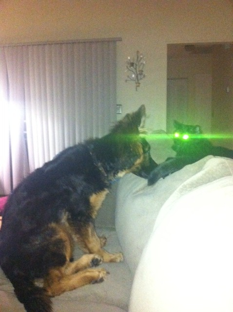 Crash, the world's nuttiest, wants-to-scratch-youiest cat on the planet, uses his laser eyes to take down Evie, who only wants to be friends.  And eat you.