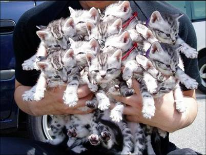 Massive armful of kittens
